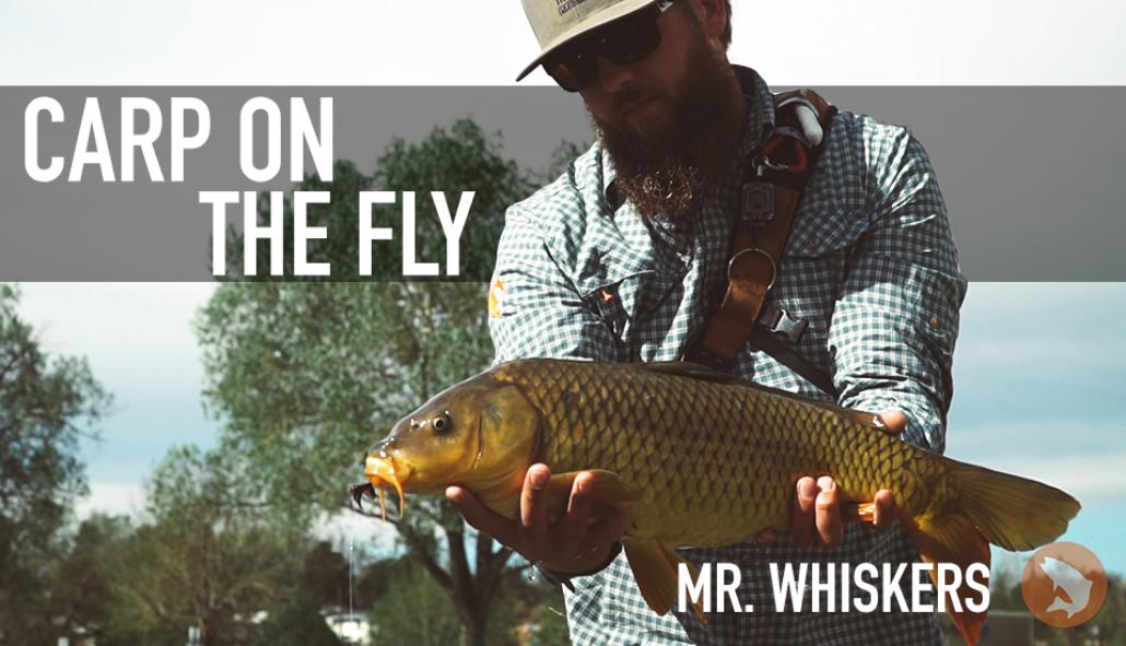 80b629fc5394d Trouts Fly Fishing